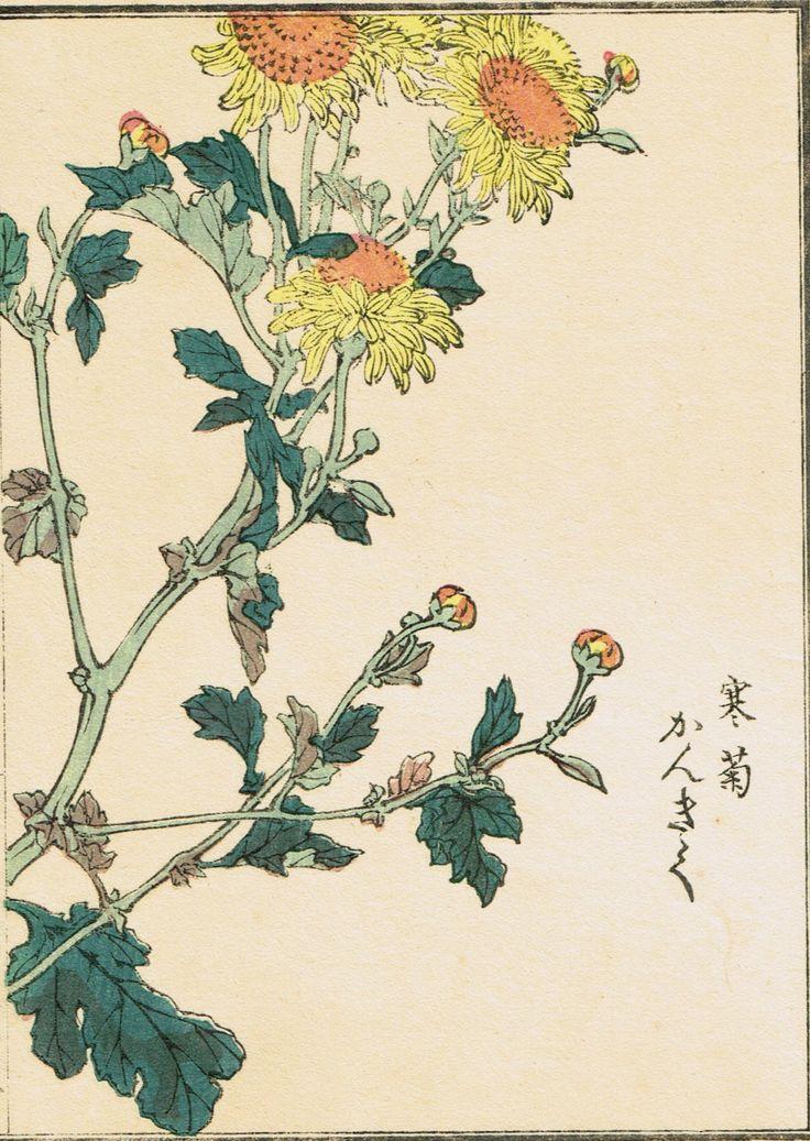 Image result for Winter Chrysanthemum (Japanese Woodblock print by Kono Bairei)