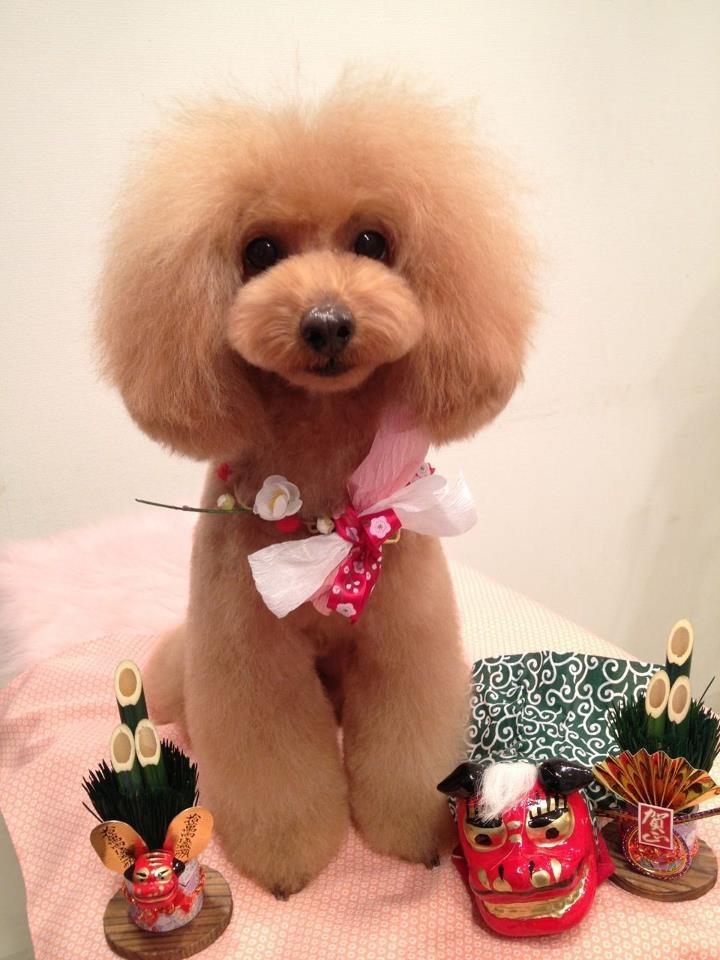 japaneese estilo perrito