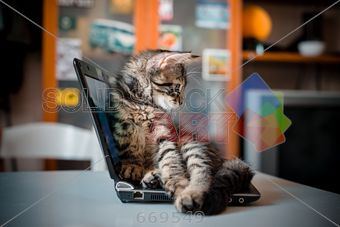 stock photo of cat lying on the notebook at home