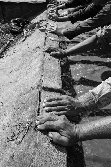 John Vink. CAMBODIA, Prey Nob (Preah Sihanouk). 7/08/2015: Daily workers, hired for 6$/ day by Mr. Ly Tong, owner of 6 hectares and renting 6 more, push the barge which transported rice seedlings from the nursery to be transplanted to a better location on the field.
