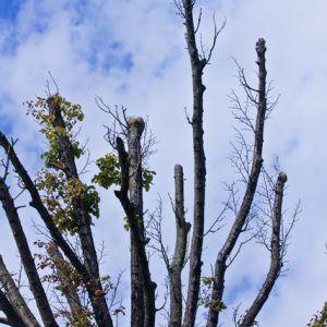 Dry tree 1