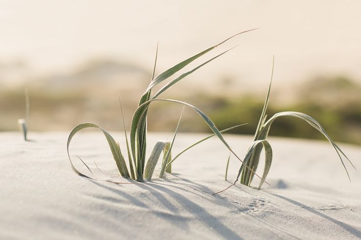 Robert Lang Photography - Landscape