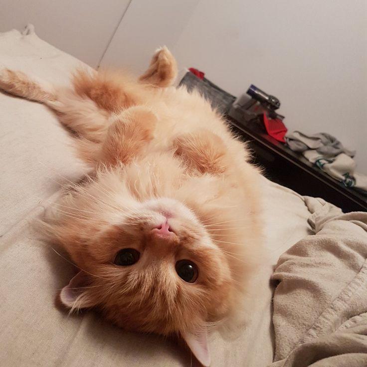 Cat Heart Murmur Natural Treatment