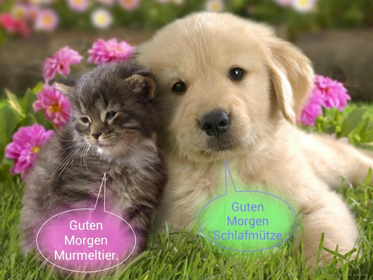 Google Good Morning In French : Kitten and puppy wishes good morning in german kätchen