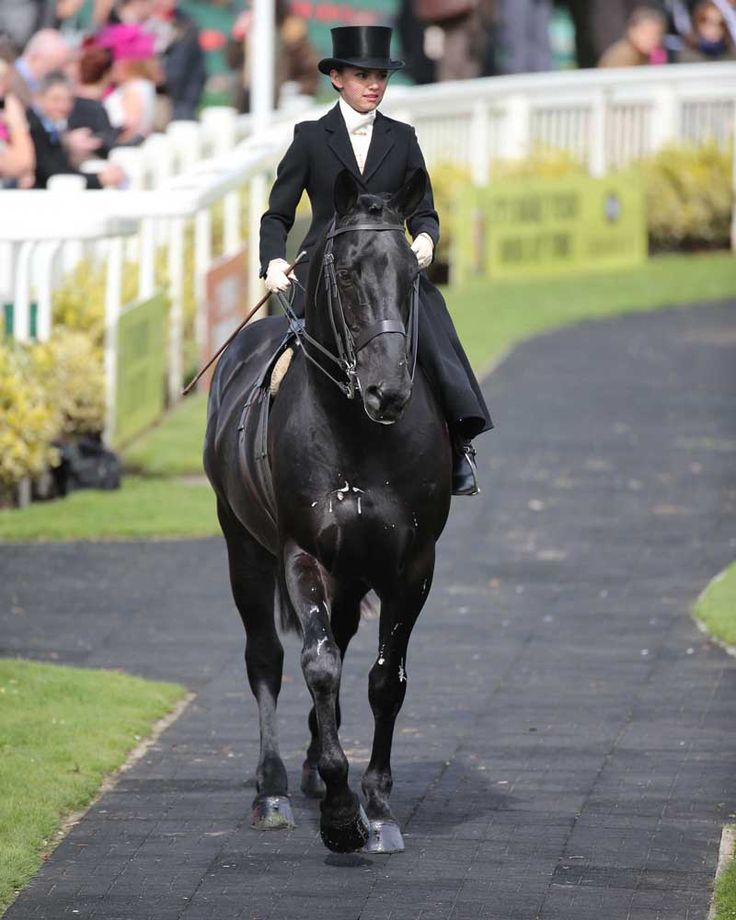Cos Me is Black at Ladies Day at the Grand National Meeting, Aintree Racecourse.