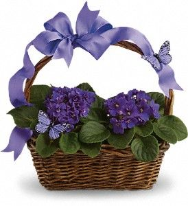 Violets And Butterflies in Oneida NY, Oneida floral & Gifts