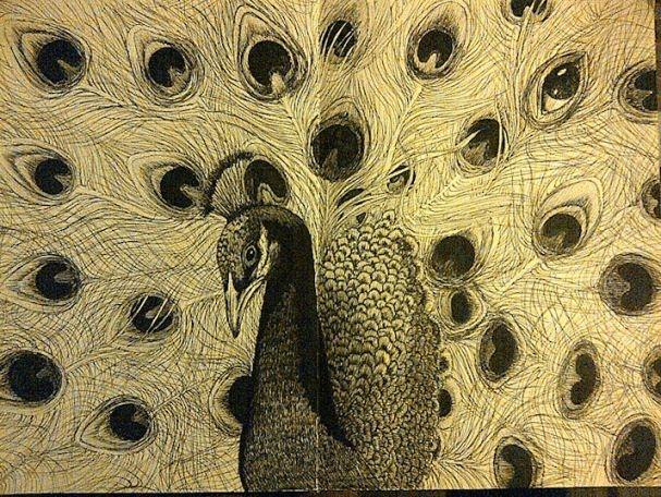 The Perceptive Peacock