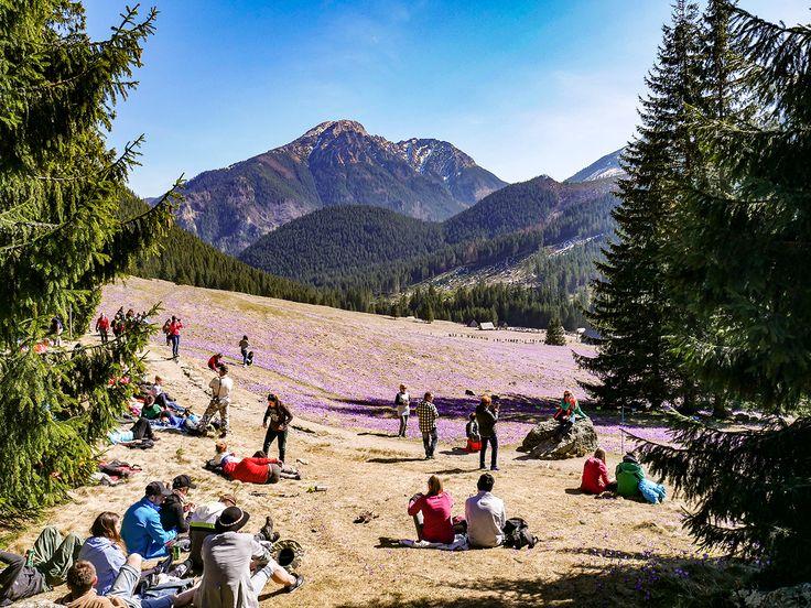 Polish Tatra Mountains - Chochołowska Valley  #mountains #tatramountains #poland #polishmountains #travel #travelblog #europe #flowers #nature #naturelover #landscape #zakopane #whattoseeinpoland