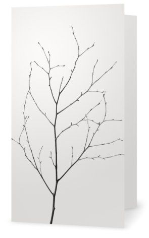 Birch, björkkvist. Cards for florists. Gift card for flower arrangements. Scandinavian design. Jäderberg & Co.