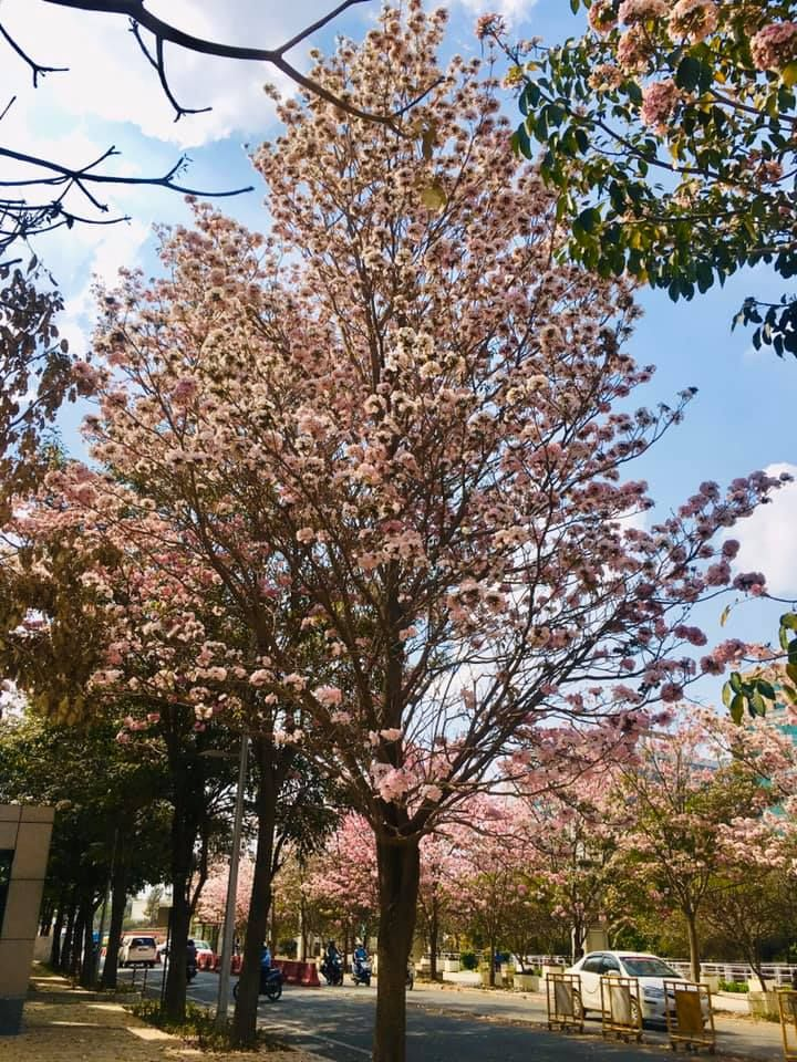 India S Cherry Blossom Nature Photography Nature Pictures Nature Quotes