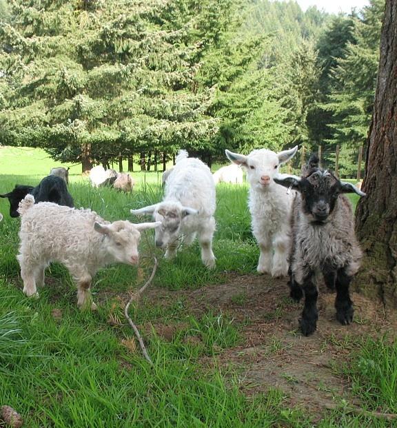 778 Best Goat Farm Images On Pinterest: 29 Best Homestead Equipment Images On Pinterest