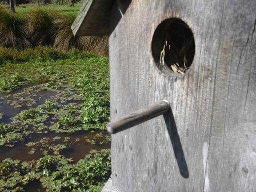 Birdhouse photo