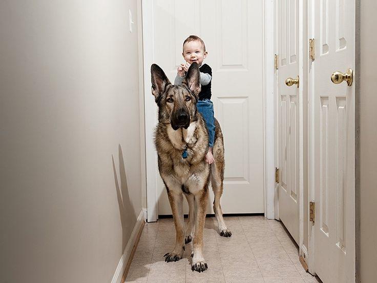 Μωρά και σκύλοι προσπαθούν να επικοινωνήσουν!!!