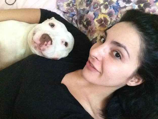 What programs has Animal Planet aired about pit bulls?