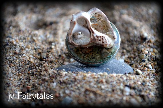 Sea Shell Ring by jvFairytales on Etsy