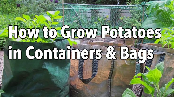 Growing Potatoes in Containers - How to Grow Potatoes in Bags or Pots