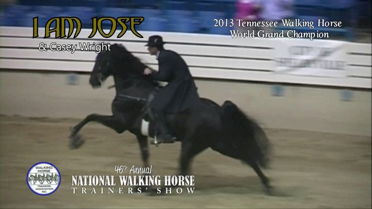 """2013 Tennessee Walking Horse WGC """"I AM JOSE"""" Trainer's Show 2014 Exhibition. In 1939, the first Tennessee Walking Horse National Celebration was held, an annual event that in recent years has attracted considerable attention and controversy."""