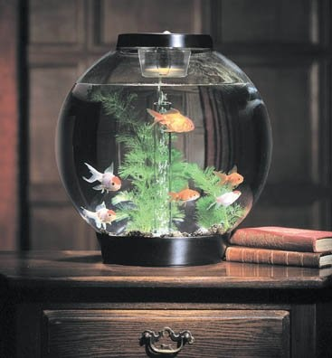 Cute little fish tank! This would fit anywhere!