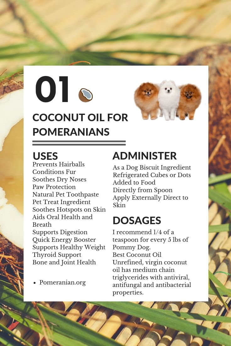Health Benefits Of Coconut Oil For Pomeranians Coconut Health Benefits Benefits Of Coconut Oil Pets
