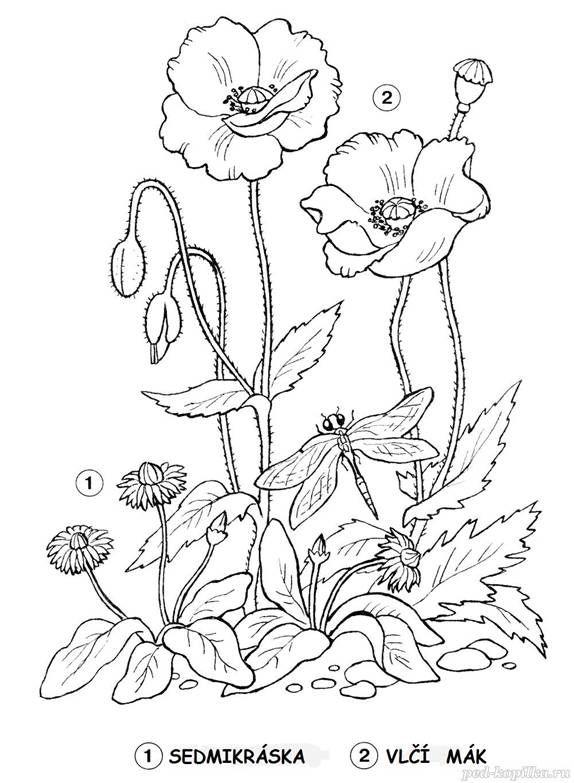 Vlci Mak Otisk Prstu Jaro Pinterest Flower Sketches