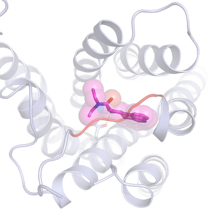 #This is LSD attached to a brain cell serotonin receptor - Phys.Org: Phys.Org This is LSD attached to a brain cell serotonin receptor…