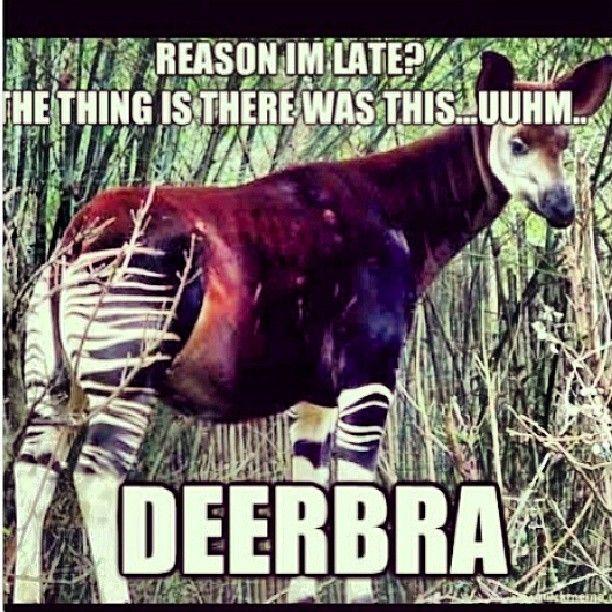 #KevinHart #deerbra   Comedy Works   Pinterest   Kevin ...