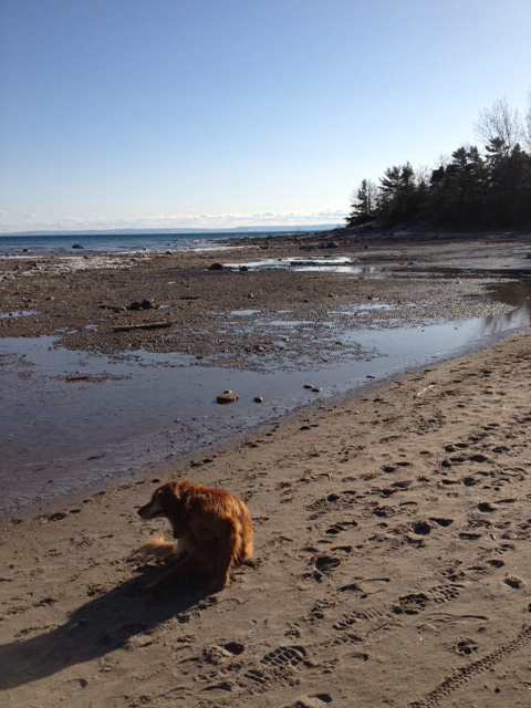 April 2013 - Cawaja Beach, Tiny, Georgian Bay - last summer the water level at this beach was up to about where the dog is sitting.