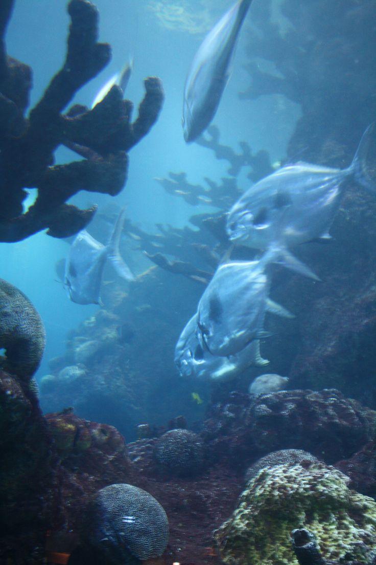 New England Aquarium Boston Massachusetts New England