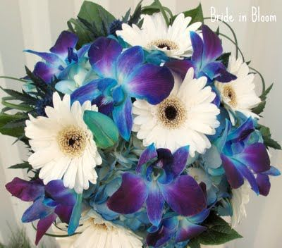 Bride in Bloom: Blue orchid bridal bouquets and white gerber daisies. LOVE