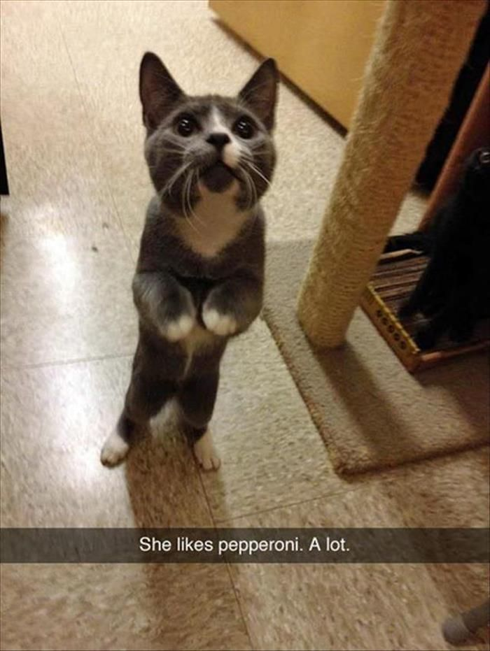 Funny Animal Pictures Of The Day – 20 Pi