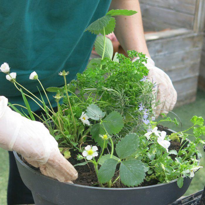 Un mini potager dans une jardinière