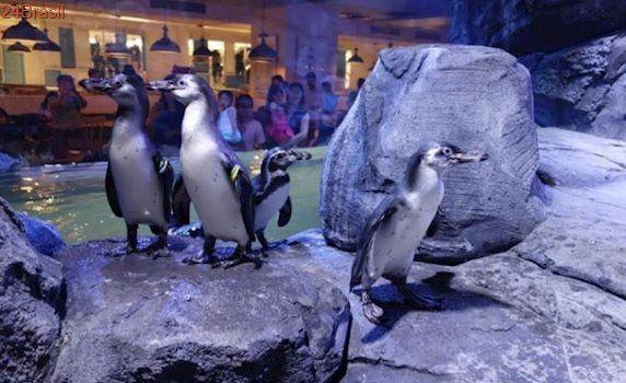 Pinguins são forçados a viver dentro de restaurante para entreter público