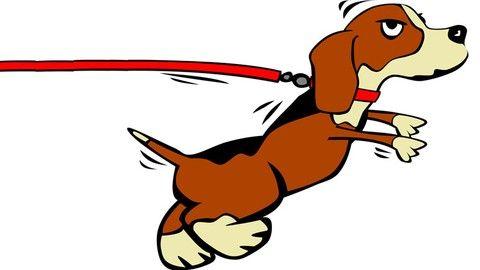 Bad Dog Behavior Enroll Now Dog Training Animal Behavior Puppy