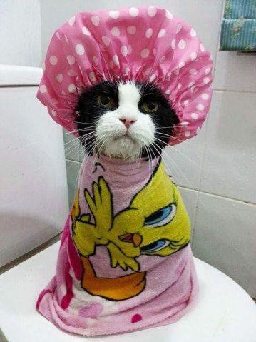 Donos mostram seus gatos, cães e até porcos-espinho tomando banho: vem ver a fofura!   Virgula