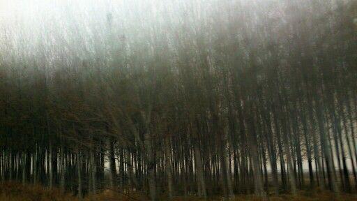 Bosque en la niebla. Lleida.