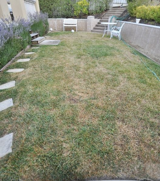 lawn-before.jpg. see the 2 weeks later picture after putting Ammonium sulfate and water