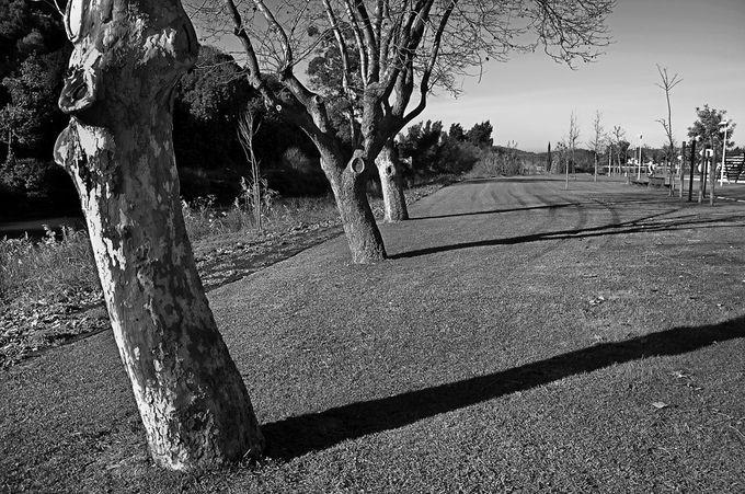 """Photo """"TheOldLadiesPark"""" by carlosdesousaramos"""