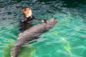 Rescued false killer whale calf at Vancouver Aquarium