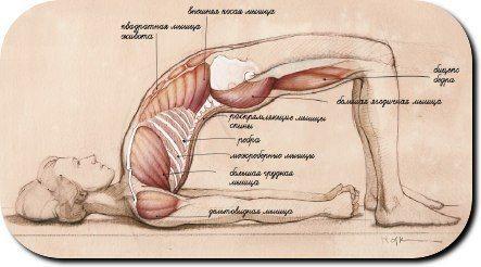 Ровная красивая спина, здоровый позвоночник и хорошее настроение достанутся в награду тем, кто будет ежедневно практиковать Сету Бандха Сарвангасану (позу Построения моста). Сету Бандха Сарвангасана (поза Построения моста) укрепляет заднюю поверхность и раскрывает переднюю часть тела. Поза укрепляет тыльную часть шеи, что делает ее эффективной подготовкой к Сарвангасане (Стойке на плечах) и отличной практикой для сохранения спины в хорошей форме. На пути построения изящной асаны стоят три…