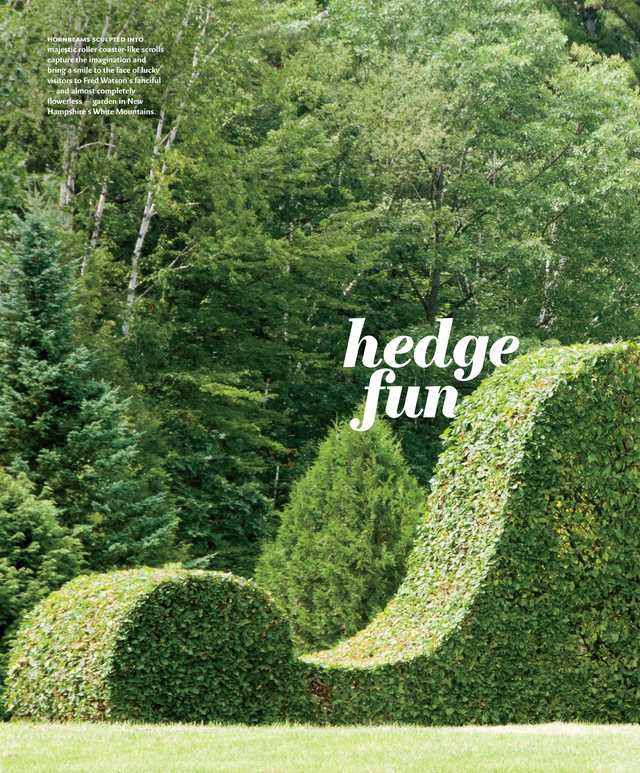 Inspiration for fun Hedge along The Pines edging the back ...