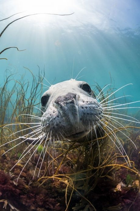 Fotografia subaquática britânicos vencedores do concurso - em fotos | Meio Ambiente | The Guardian