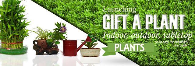 Buy Plants Online Indoor Outdoor Plants Online Garden Nursery