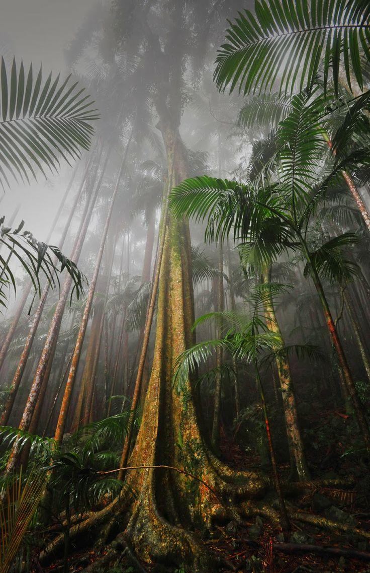 Mount Tamborine Rainforest, South East Queensland, Australia: