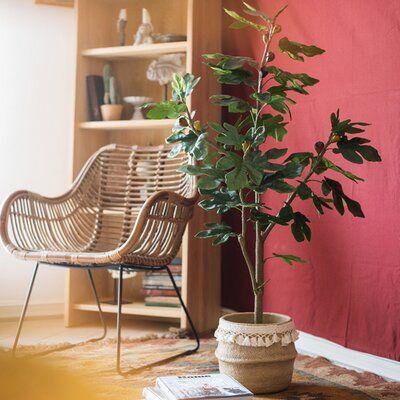 "Künstlicher Feigenbaum Gracie Oaks im Topf Maße: 59 ""H x 31,5"" B x 4,9 ""T  – Products"