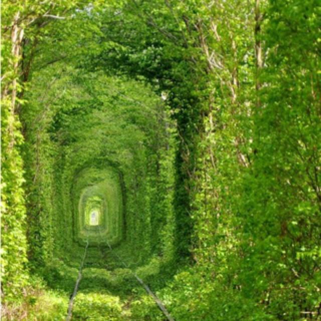 Train Tracks, Secret Gardens, Trees Tunnel, Green, Training Track, The Secret Garden, Places, Tree Tunnel, Railroad Track