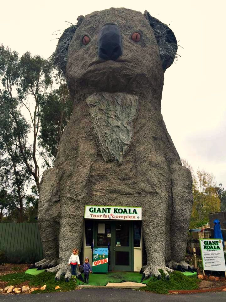 Giant Koala - Dadswells Bridge VIC  from TAWKer Kristal Gurr