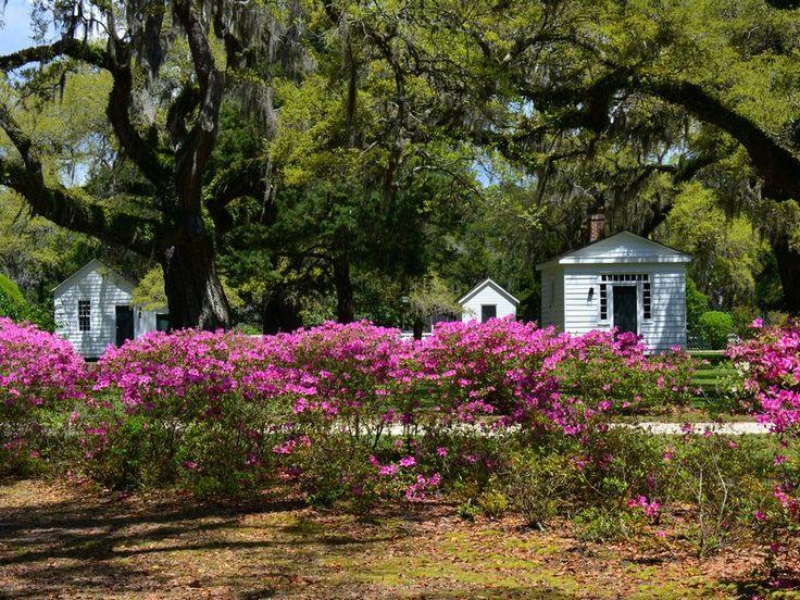 Chicora Wood Plantation 6466 Plantersville Road Georgetown, South Carolina 29440 United States