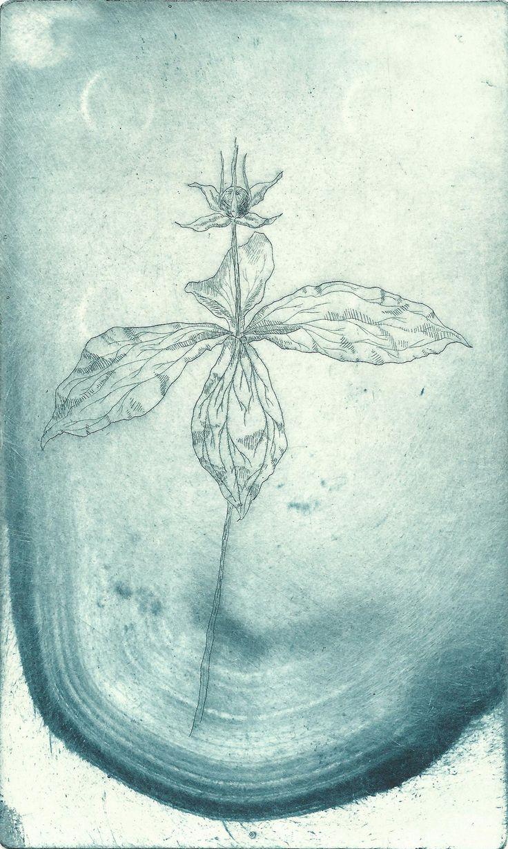Seppo Alanissi - Paris quadrifolia, 2014, etching, monoprint