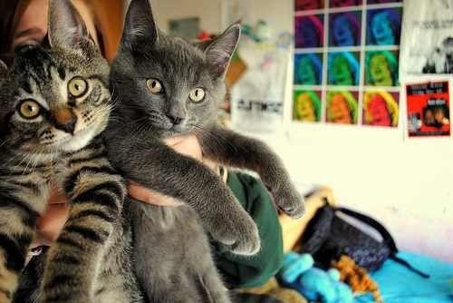 Sweet pair of kitties