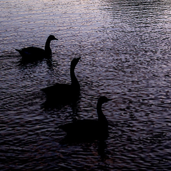 3 Geese